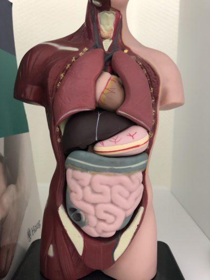 Unsere Organe